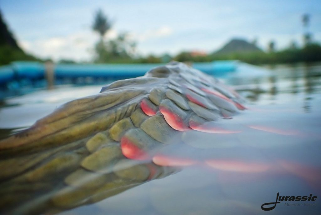 Fishing in Thailand - June 2020 19
