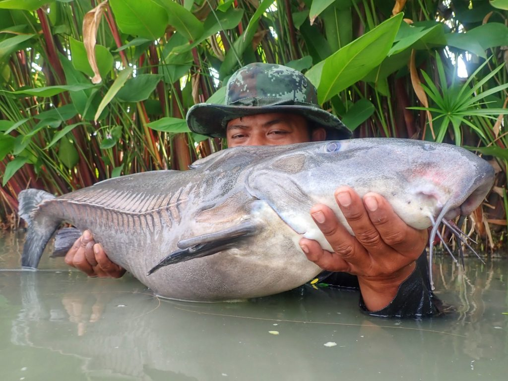 Fishing in Thailand - August 2020 8