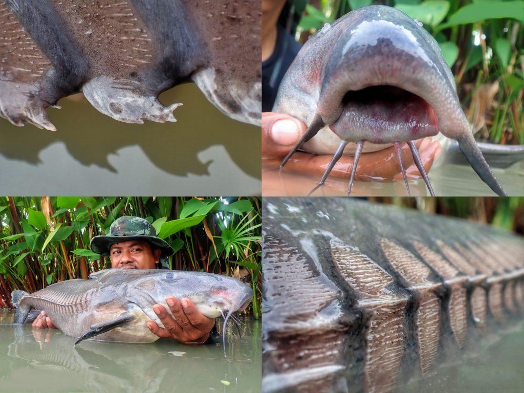 Fishing in Thailand - September 2020 22