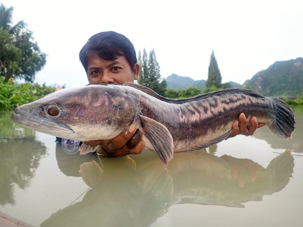 Fishing in Thailand - October 2020 8