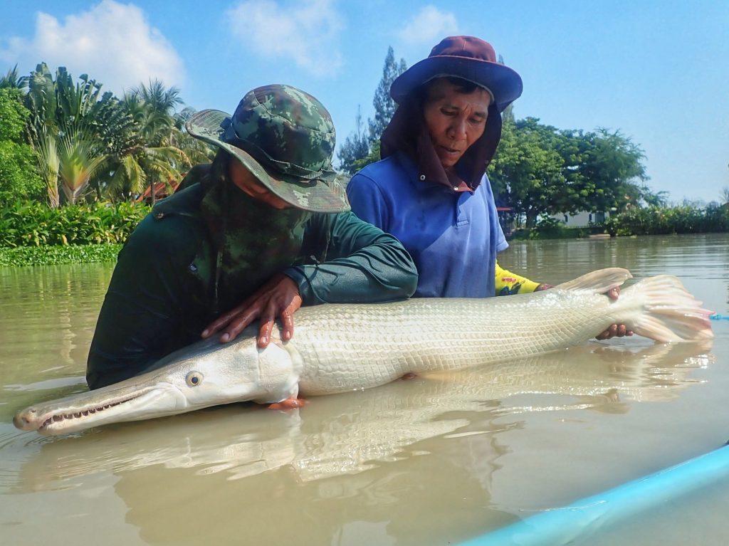 Fishing in Thailand - November 2020 7