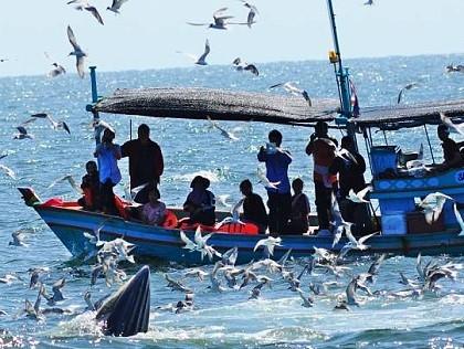 Fishing in Thailand - November 2020 13